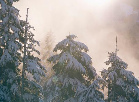 Metsien arvo hiilinieluina on ääretön.