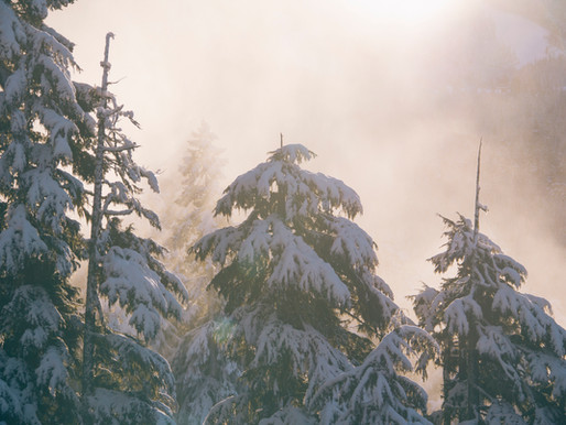 Earth Laughs in Snowfall