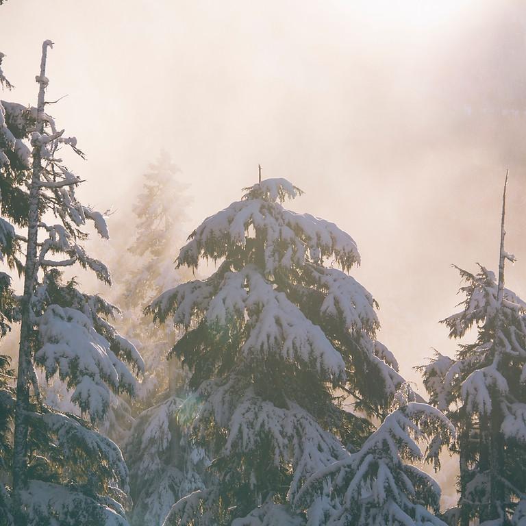 Enter the Quiet - Women's Winter Silent Retreat