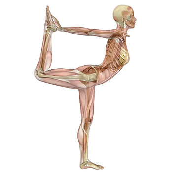 Natarajasana-anatomy-square.jpg