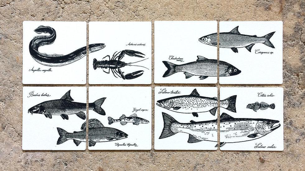 Glasuntersetzer 8er Set «Fische»