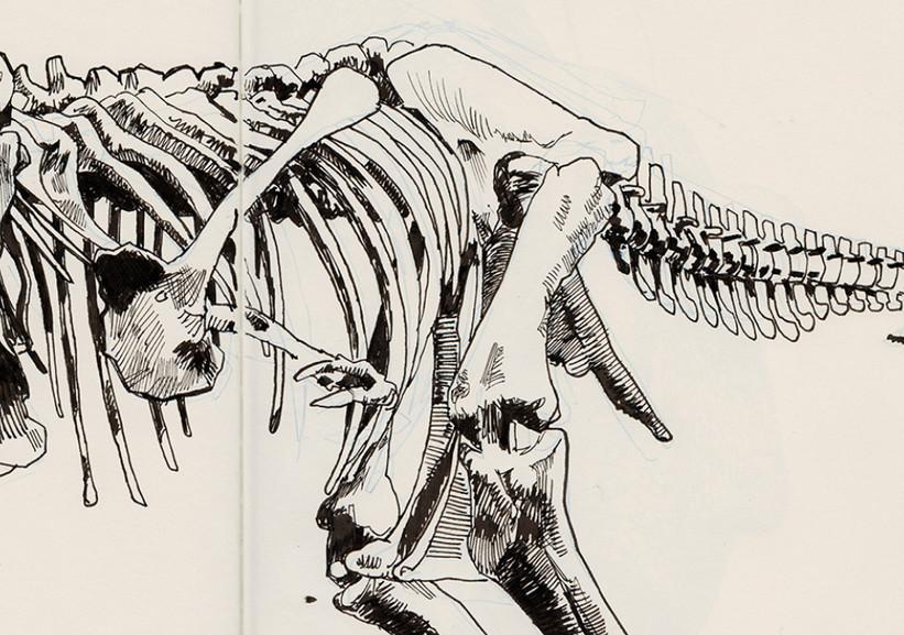 s-t-rex_2.jpg