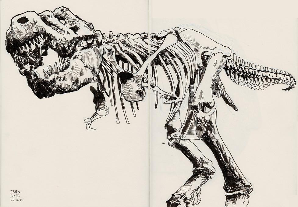 s-t-rex_1.jpg