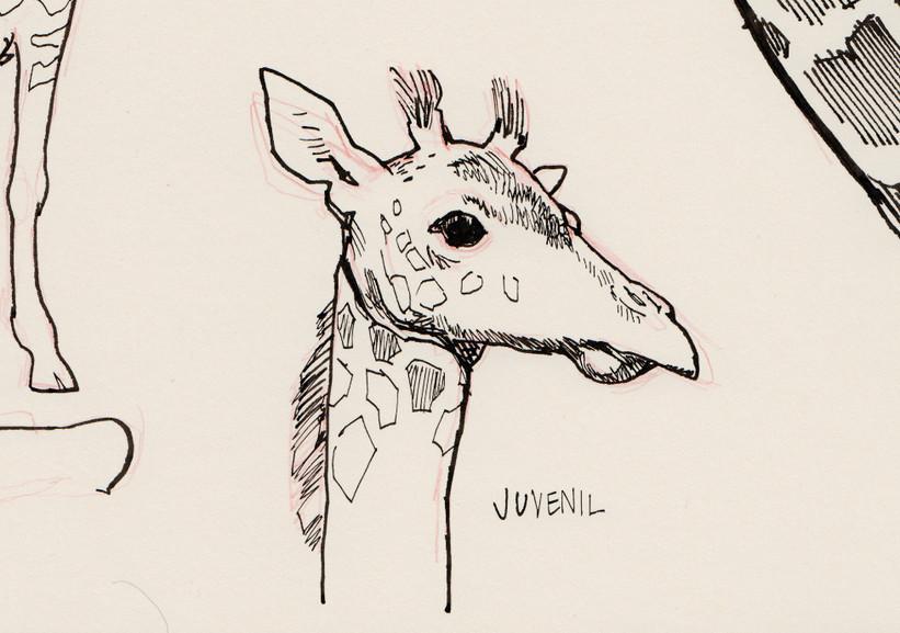 s_giraffen_3.jpg
