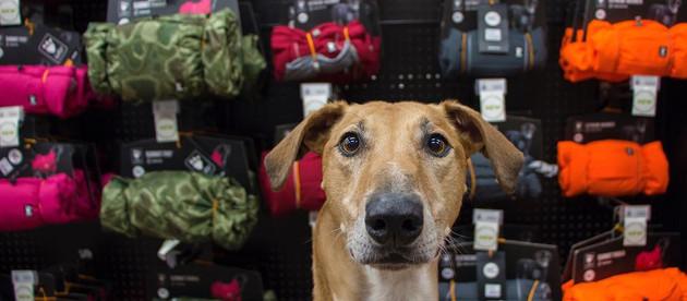 RETAILER SPOTLIGHT: Homes Alive Pets