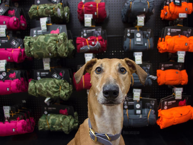 RETAILER SPOTLIGHT: Homes Alive Pets