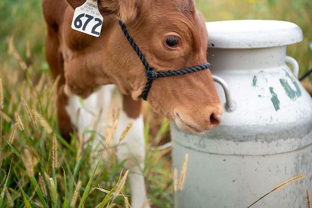 MBF pajama party milk jug.jpg