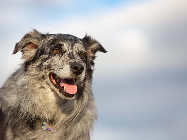 Purina Farm Dog of the Year | Woody