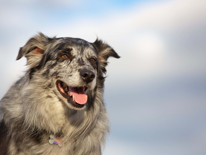 Purina Farm Dog of the Year   Woody
