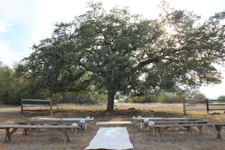 oak Wedding ceremony