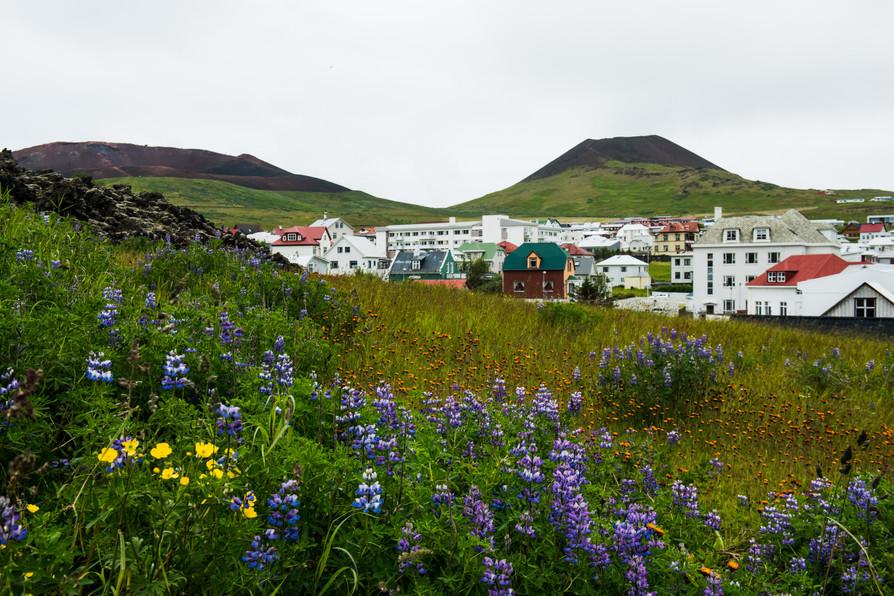 IcelandStuff-9832.jpg