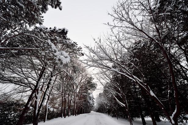 WinterWonders.jpg