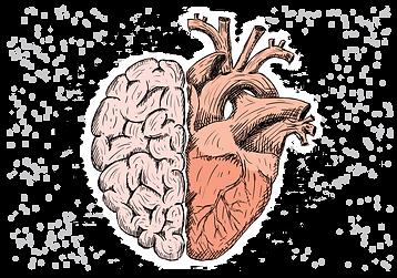 Cerveau & coeur.png