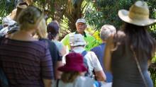 Bush Tucker in Lake Macquarie