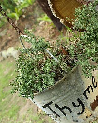 Hillview herbs.jpg