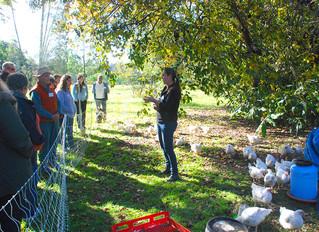 Rehabilitating the land with animals