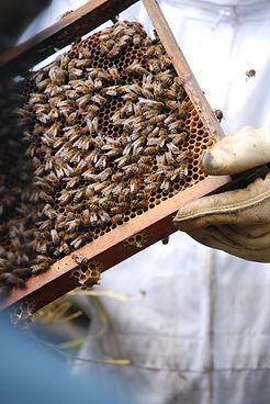 Michelle Teear photography urban hum beekeeping