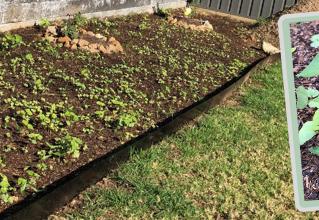 Backyard Transformation - Part Two