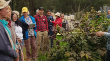 Elaringai Permaculture Field Day Report