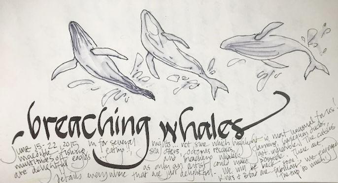 between_breaching_whales.jpg