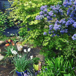 In a corner of the garden....