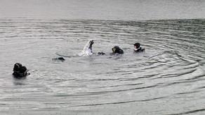 Rescue Workshop im Strandbad Gmünd