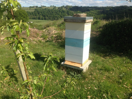 OUR PARTNERSHIP WITH OUR BEES