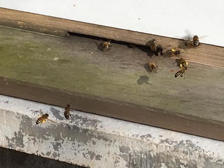 HONEY BEE POLLEN LEGGINGS