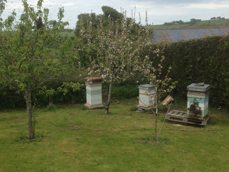 It's swarm here on the farm