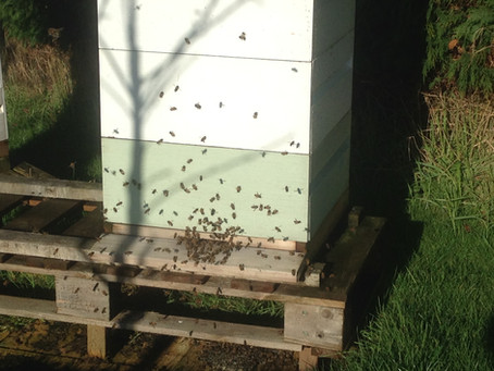Happy bees first venture out this year