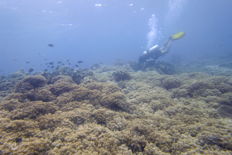 Maratua Underwater