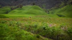 Green Wanderer