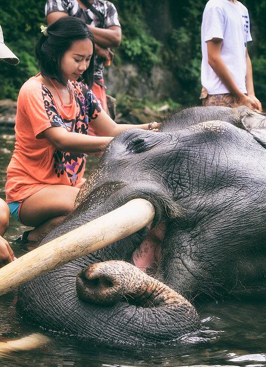 Elephant Banthing