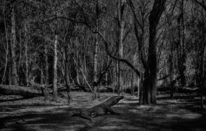 Komodo Black & White