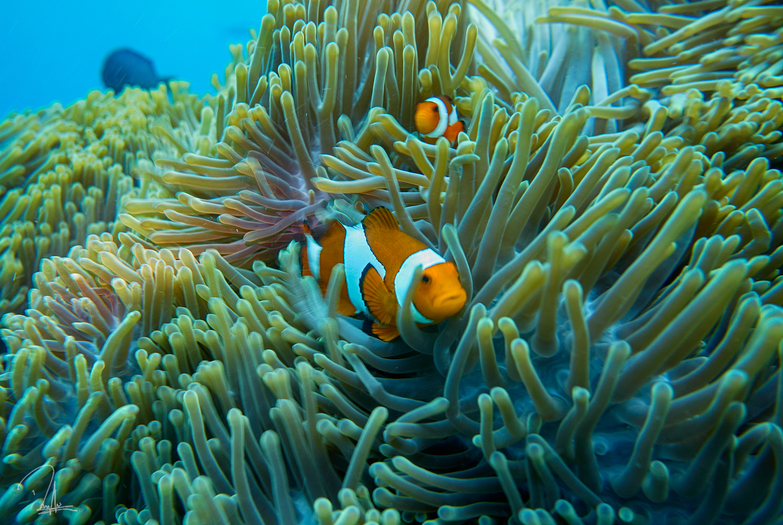 Green Nemo