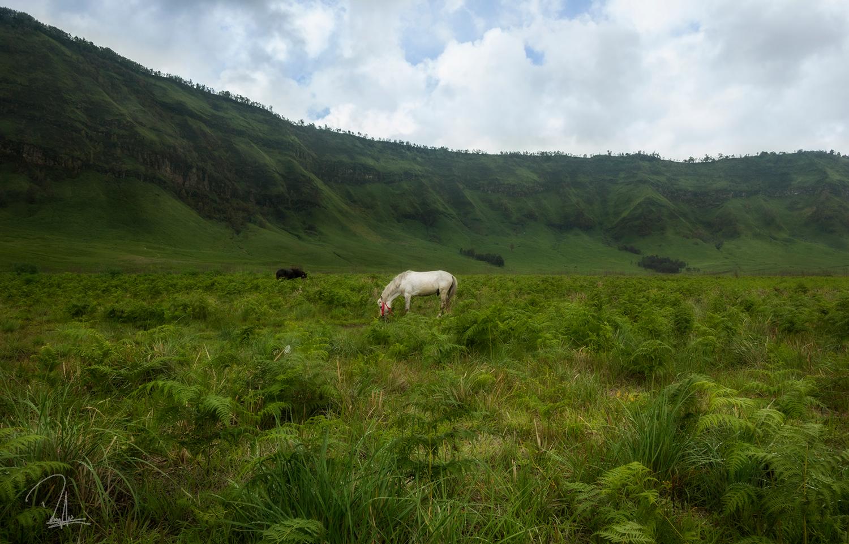 Bromo Grassland
