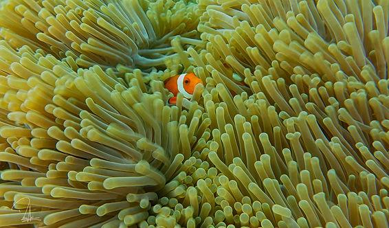 Dive at Maratua