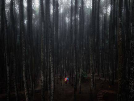 Pine Forest, Mangunan