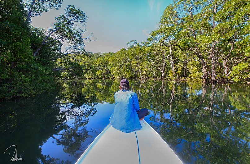 Mangrove Forest - Sigendis