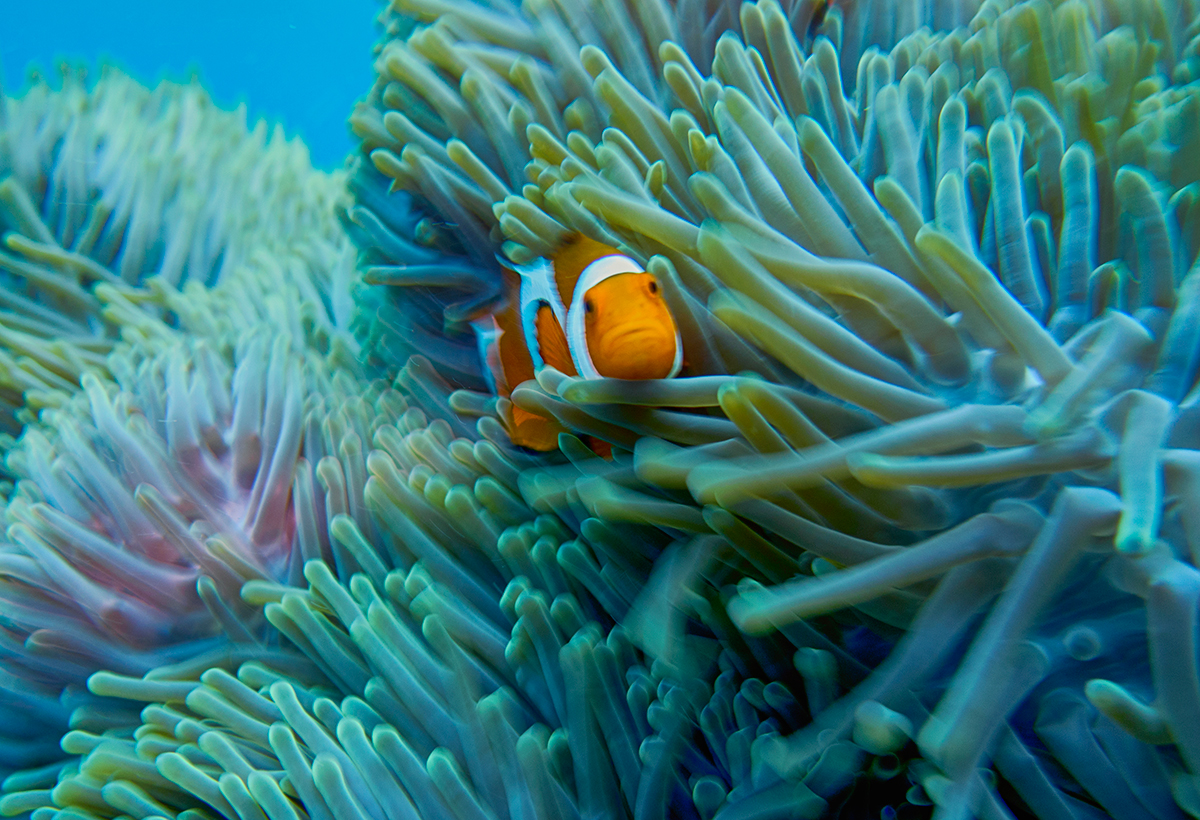 Find You Nemo!