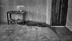 Komodo inside the House