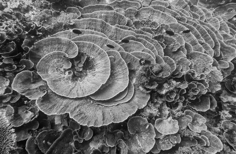 Maratua Flowers