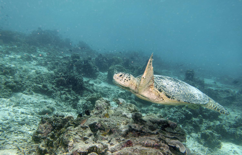 Turtle Traffic