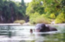 Gajah di Sungai
