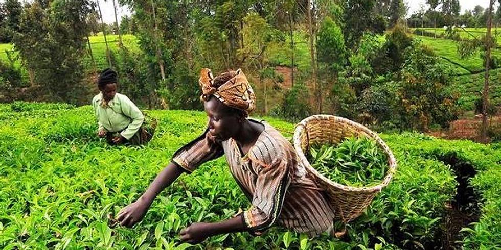 Strategic Partnerships for Agricultural Innovation & Entrepreneurship in sub-Saharan Africa