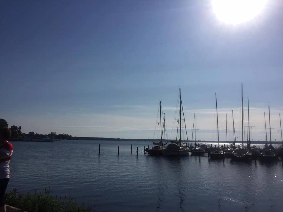 Müggelsee Foto vom Ufer