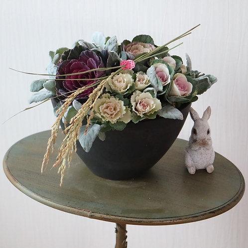 北国から葉牡丹の寄せ植え(黒オーバル花器)