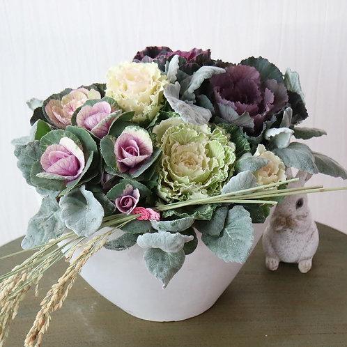 北国から葉牡丹の寄せ植え(白オーバル花器)