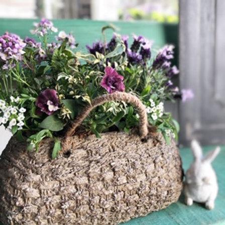 編み模様セメント鉢にsoraもこ寄せ植え