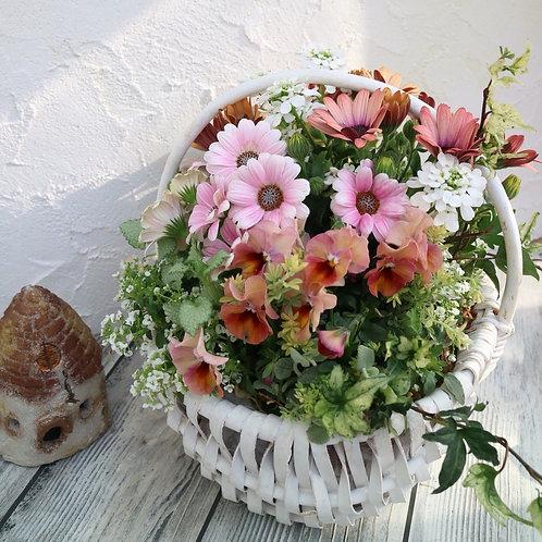 【予約販売・送料特割】母の日ギフトsoraもこおまかせ春色バスケット寄せ植えS